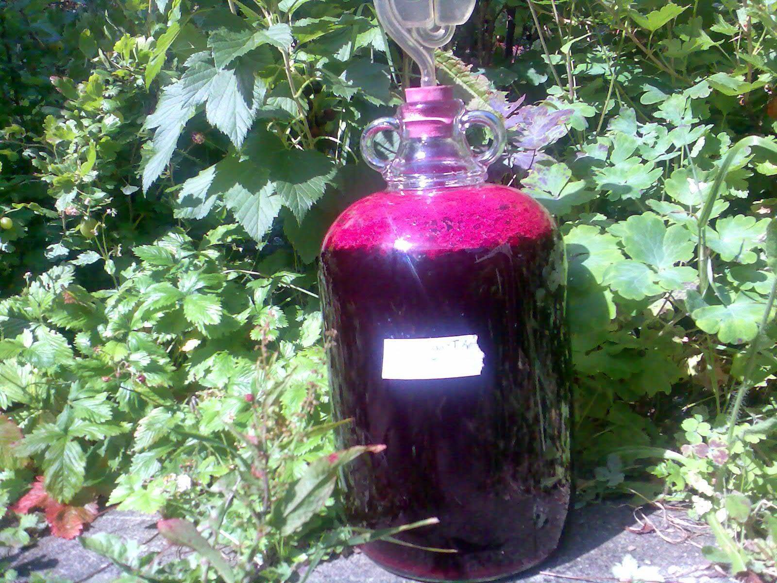 Вино из черной смородины: простые пошаговые рецепты в домашних условиях, польза и вред