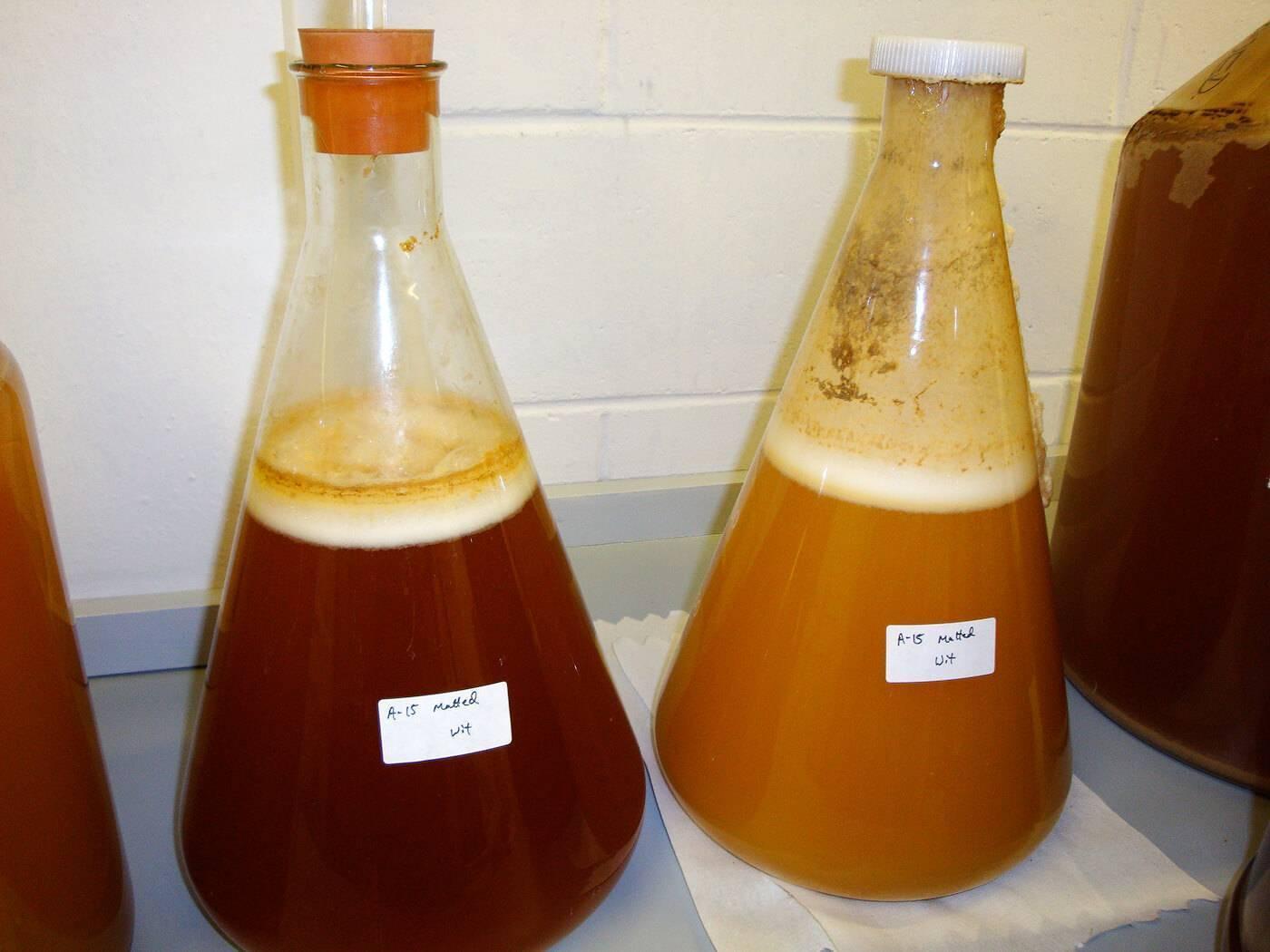 Длительность и температура брожения пива