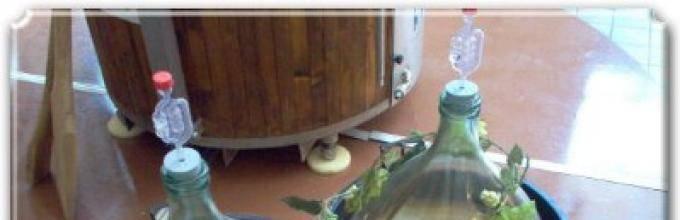 Брага на березовом соке: особенности приготовления
