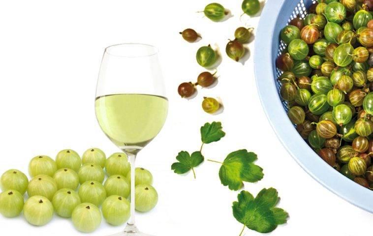 Как сделать вино из зеленого крыжовника дома