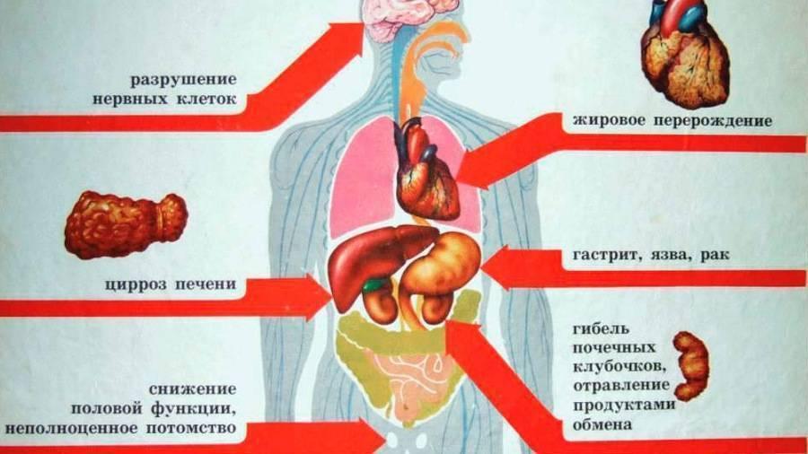 Алкоголь и мышцы — можно ли пить после тренировки? | by best fit | medium