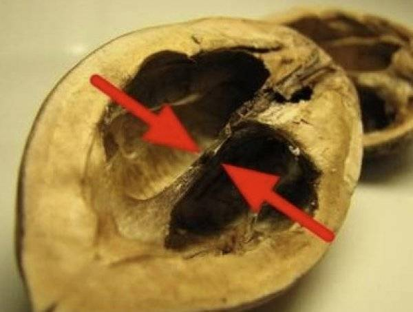 Настойка на грецких орехах: польза и вред, настойка на перегородках