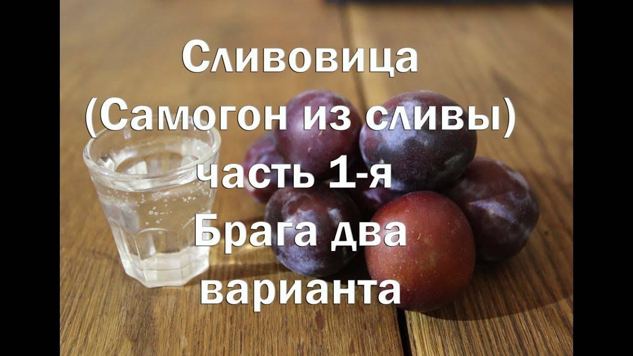 Сливовая настойка: домашние рецепты на самогоне