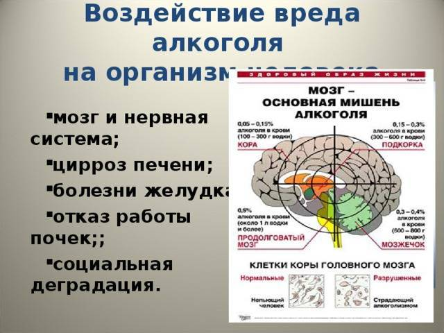 Вред курения и алкоголя. вред для здоровья от алкоголя и никотина. влияние на пищеварительную систему