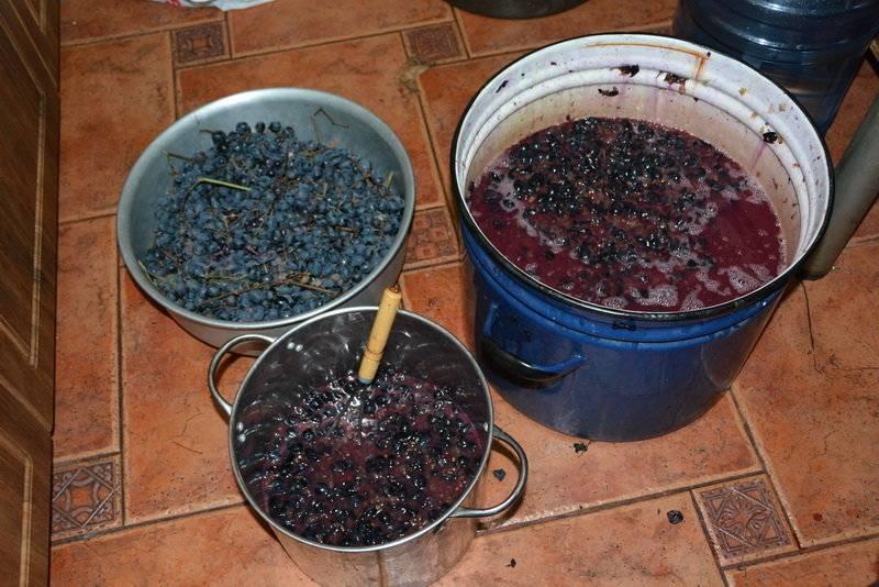 Домашнее вино из терна лучший рецепт напитка