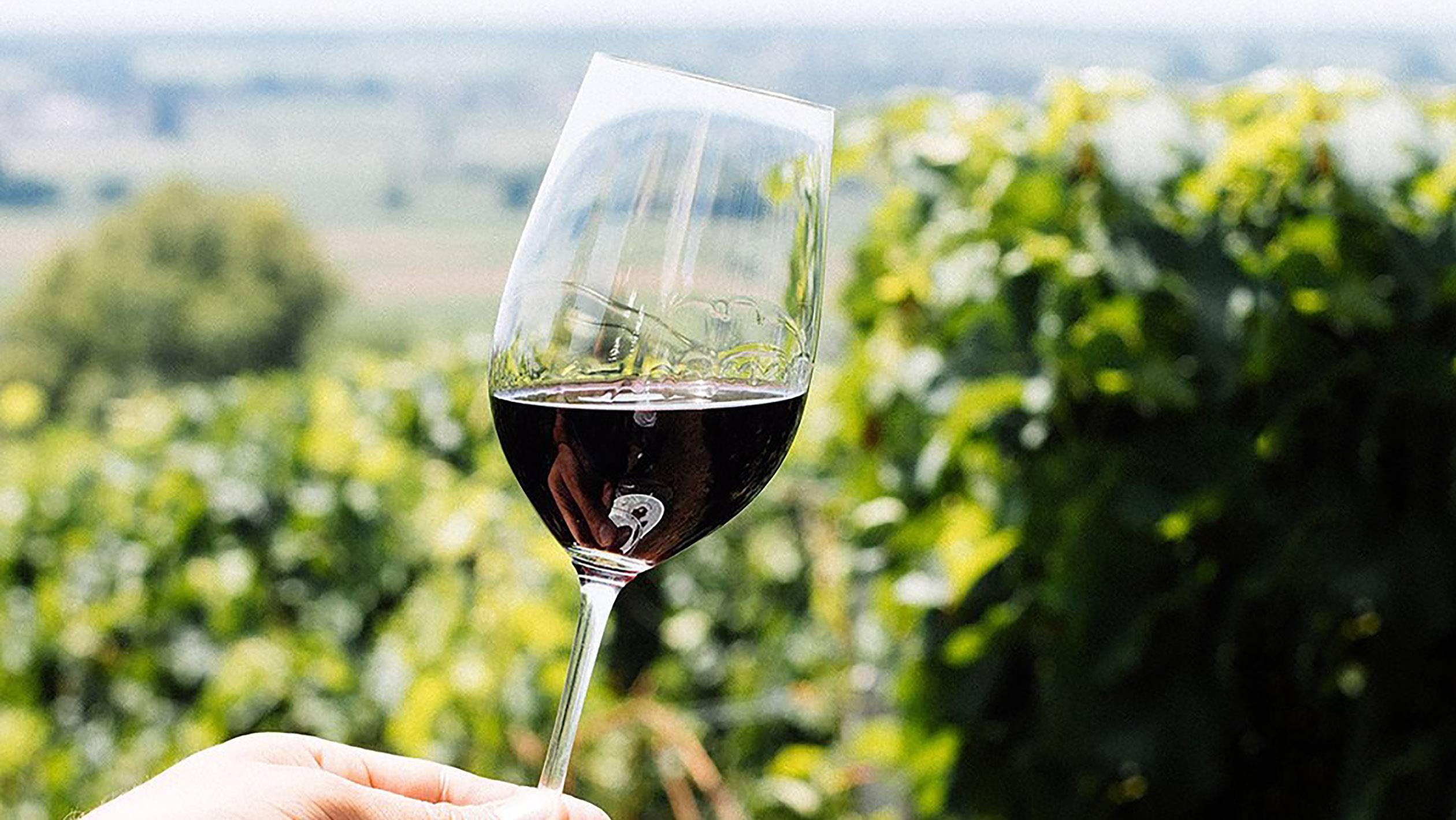 Лучшее красное и белое вино бордо