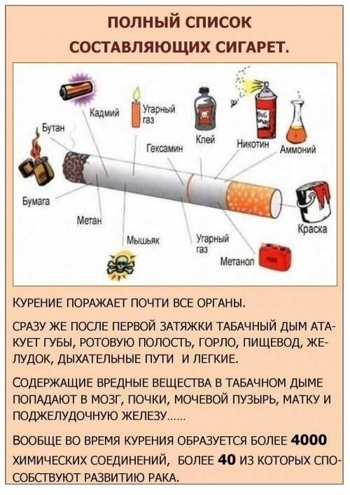 Мята перечная: лечебные свойства, противопоказания, рецепты, побочные действия
