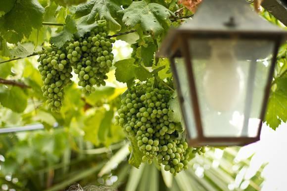 Знаменитые португальские вина – мадера, портвейн – какое купить. регионы и классификация.