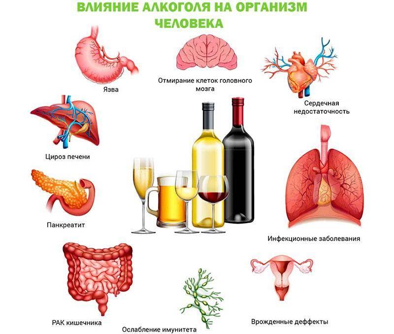 Как восстановить организм после длительного употребления алкоголя, препараты после запоя