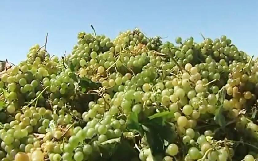 Вино цимлянское: краткое описание, цены и отзывы покупателей. история цимлянского завода игристых вин