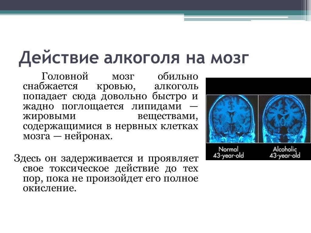 Восстановление мозга после алкоголя: нейрогенез
