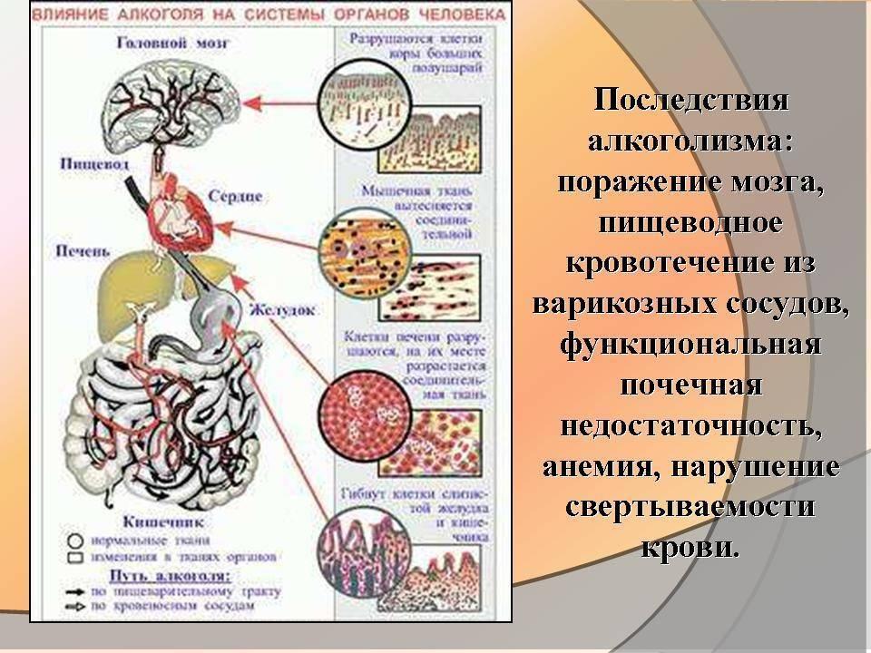 Влияние алкоголя на нервную систему человека и головной мозг