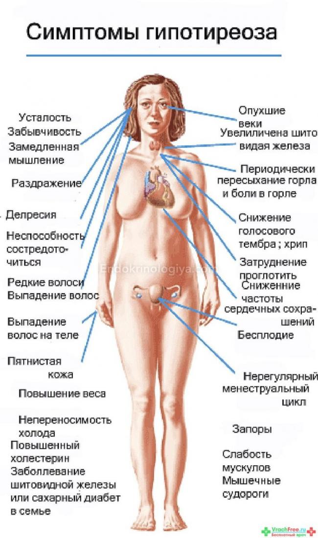 Курение и щитовидная железа: влияет ли, влияние, у женщин