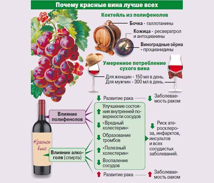 Красное вино - польза и вред для здоровья организма