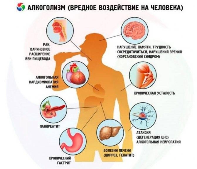 Метаболизм этанола и его действие на организм человека