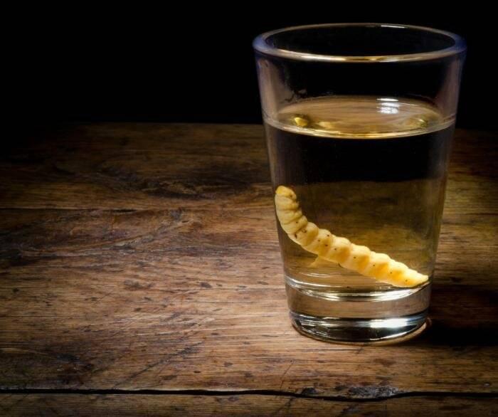 Мескаль с червячком и гусеницей: что это такое и как пить