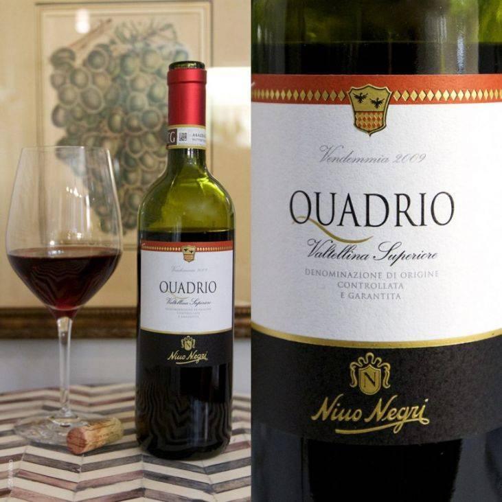 Итальянское вино: классификация, обзор лучших напитков, как выбрать качественный продукт