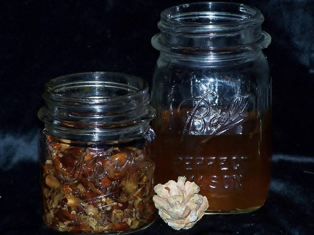 Делаем настойку на кедровых орешках — простые рецепты с водкой или спиртом