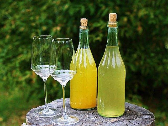 Вино из одуванчиков - готовим целебный напиток