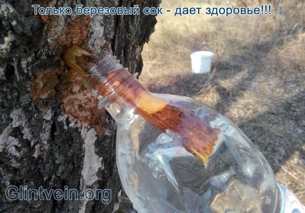 Весной готовим самогон из березового сока