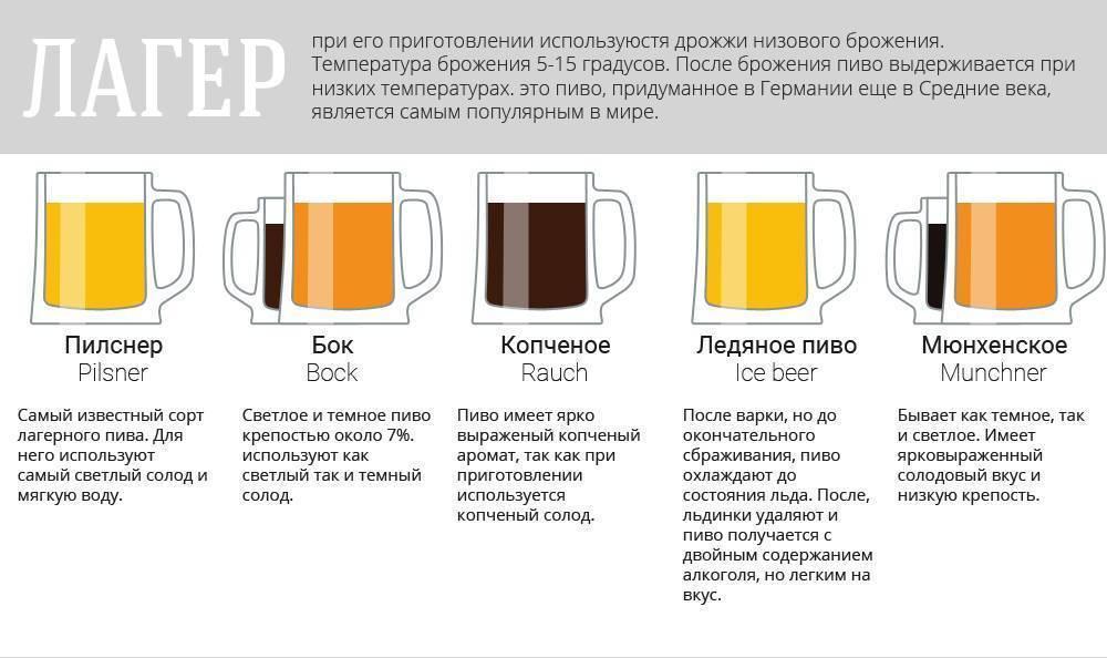 Классификация и основные сорта пива: эль, портер, лагер, пилзнер