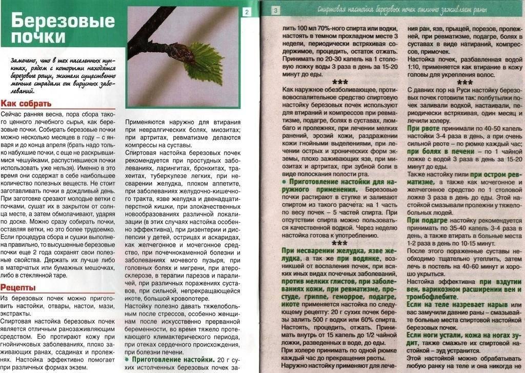 Настойка березовых почек на водке: применение, польза, рецепты, противопоказания