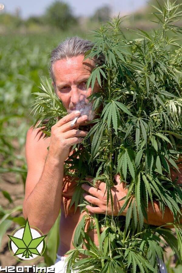 Вред марихуаны: последствия курения травы для организма и признаки зависимости