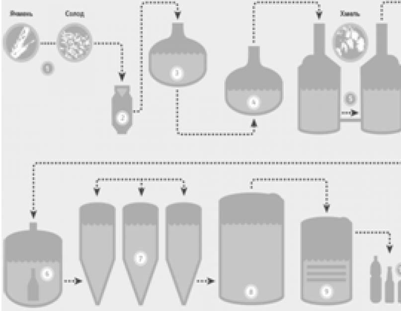 Процесс производства живого пива: просто о сложном