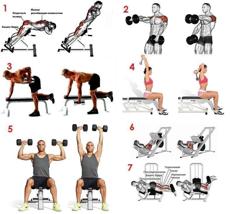 Силовые упражнения для сжигания жира для женщин в зале и дома