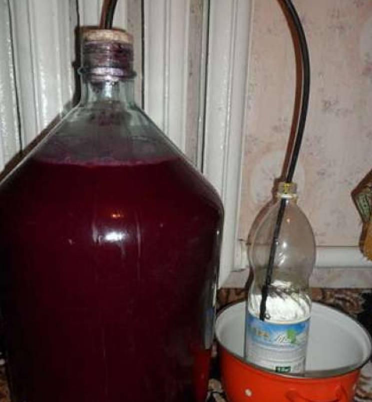 Виноградная брага для самогона: как сделать в домашних условиях, рецепт, видео