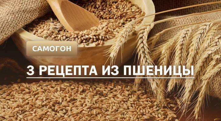 Самогон из пшеницы без дрожжей в домашних условиях