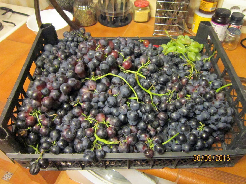 Виноградная брага для самогона
