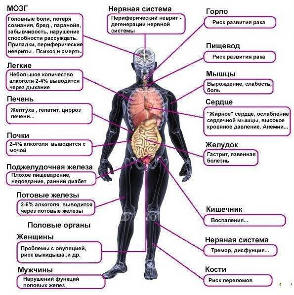 Алкоголь: как он влияет на лишний вес и мышцы?
