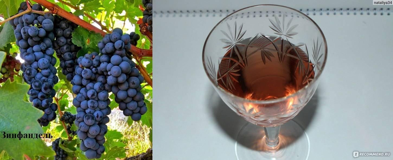 ᐉ зинфандель - виноград - roza-zanoza.ru