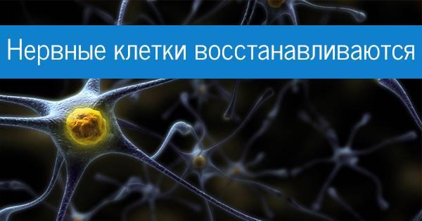 Не восстановятся теперь уж никогда. как свежее исследование поставило под сомнение реальность взрослого нейрогенеза у людей и что это может значить для науки - тасс