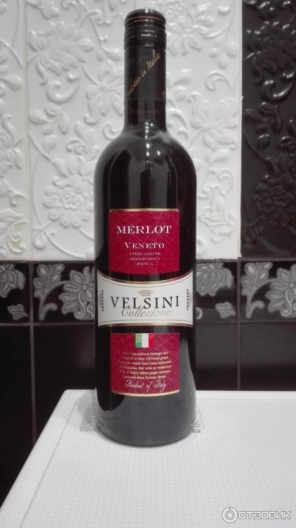 Мерло виноград: описание и характеристика сорта, выращивание и уход, чем отличается от каберне