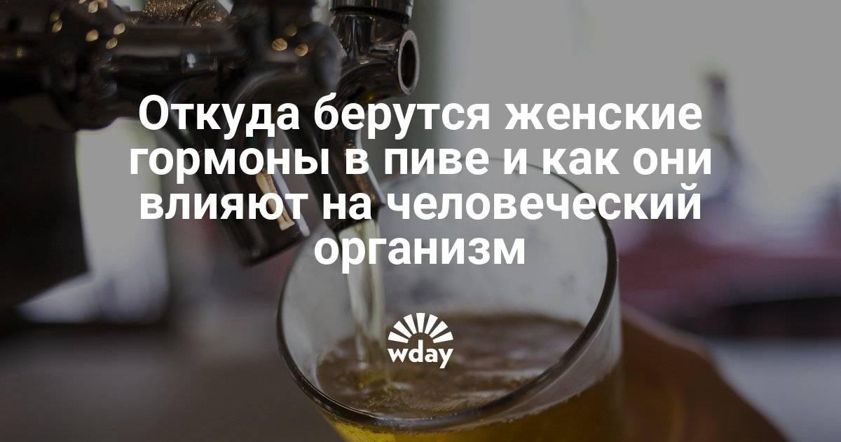 Женские гормоны в пиве: правда или вымысел