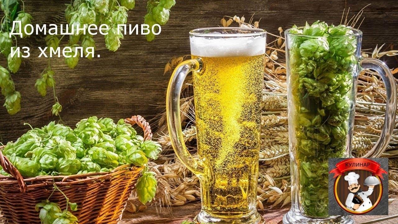 Рецепт пива из хмеля для домашнего приготовления — как варить пиво в домашних условиях из хмеля — крафтовые напитки