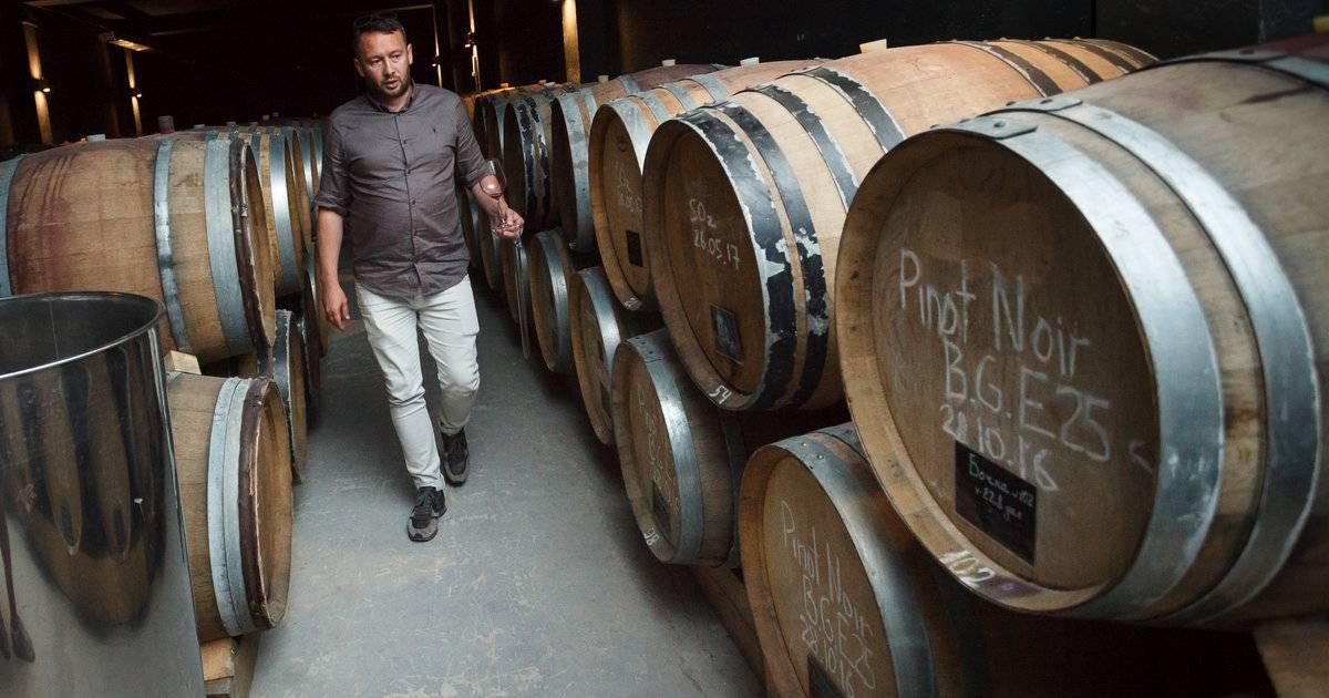 Эксперты: виноделы рф смогут отказаться от импортных виноматериалов через 10-20 лет