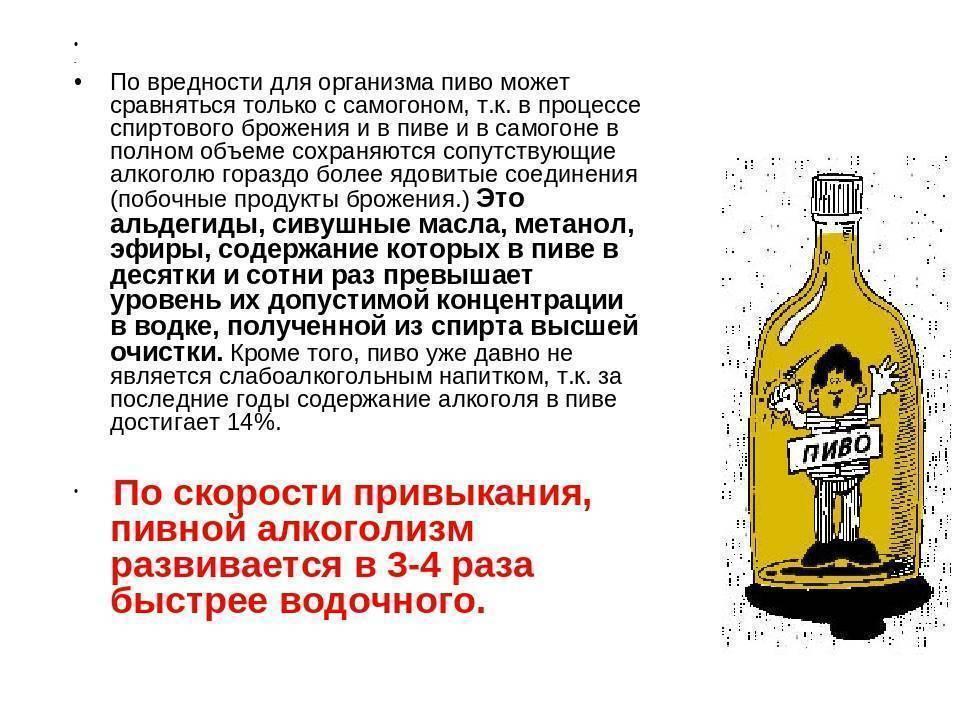 Что вреднее для здоровья сидр или пиво? | польза и вред