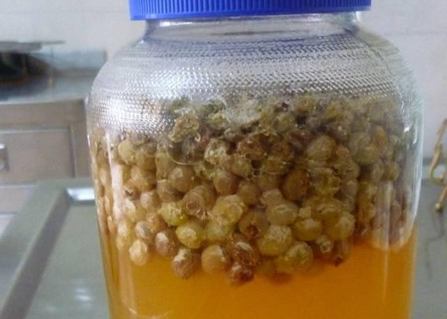 Самогон на изюме: рецепт настойки в домашних условиях, как правильно настоять напиток на водке, коньяке