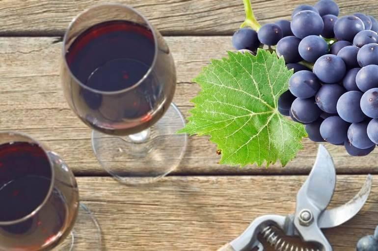 Рецепт изготовления чачи из винограда