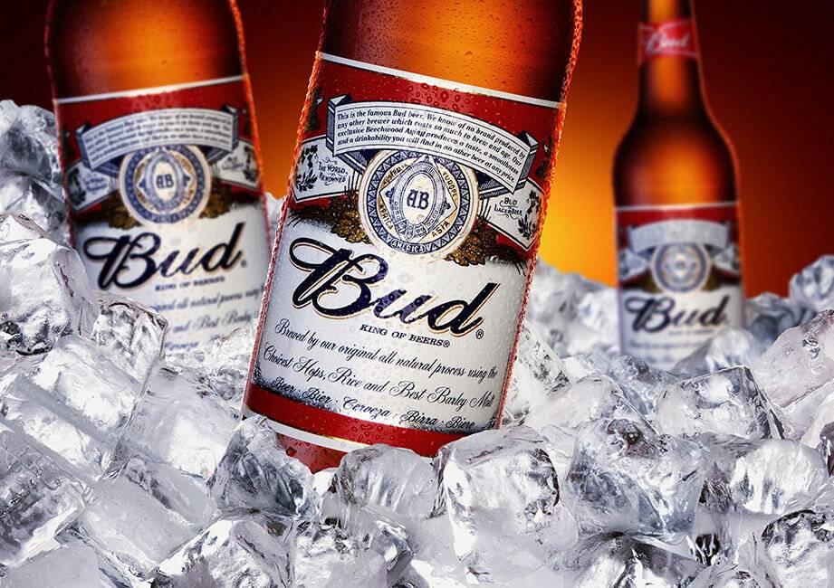 Американское пиво бад (bud) - история, особенности, виды марки, коктейли