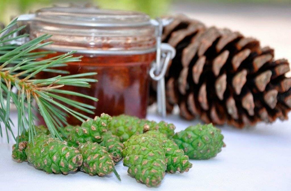 Способы настойки сосновых шишек на водке - 6 рецептов, лечение
