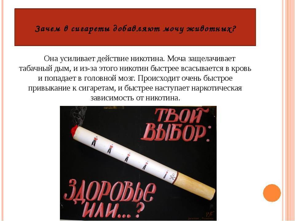 Факты о курении и сигаретах - zefirka