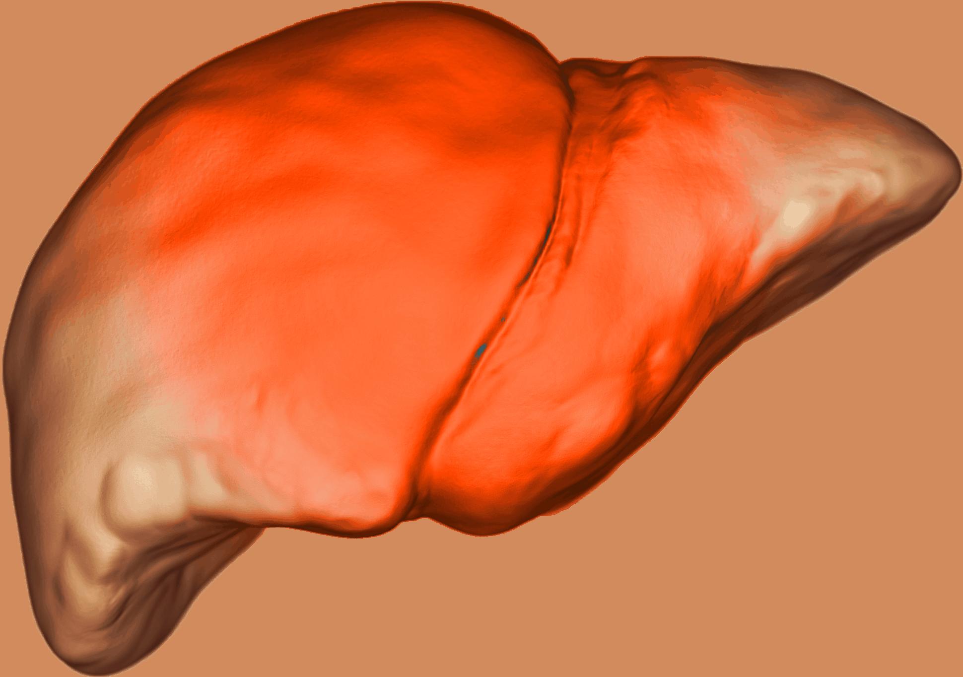 Что делать, если увеличена печень, как ее лечить и какие симптомы бывают
