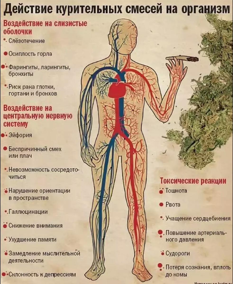 Что вреднее марихуана или алкоголь