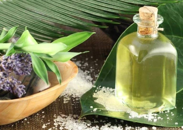 Эвкалипт – лечебные свойства настойки и эфирного масла