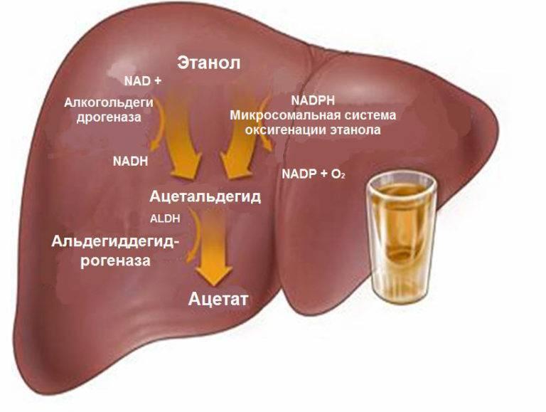 После водки болит желудок