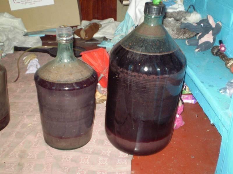 Вино покрывается плесенью, что делать при появлении грибка на домашнем вине
